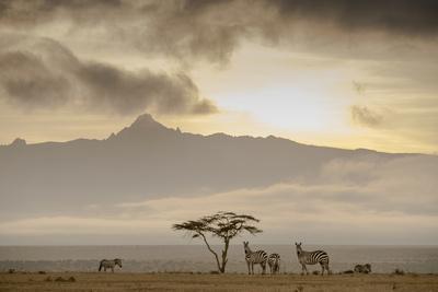 https://imgc.artprintimages.com/img/print/a-group-of-plains-zebra-equus-quagga-gather-near-an-acacia-tree-at-sunset_u-l-q1bv3yf0.jpg?p=0