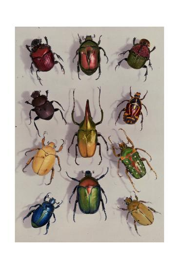 A Group of Scarabs from the Scarabaeid Family-Edwin L^ Wisherd-Photographic Print