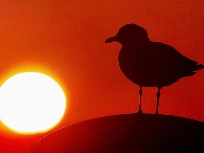 A Gull Perches on a Concrete Piling at Cleveland's North Coast Harbor--Photographic Print