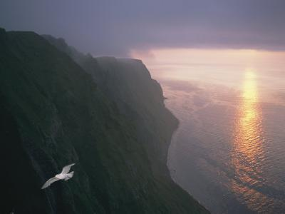 A Gull Soars Above Coastal Cliffs in Alaska-Joel Sartore-Photographic Print