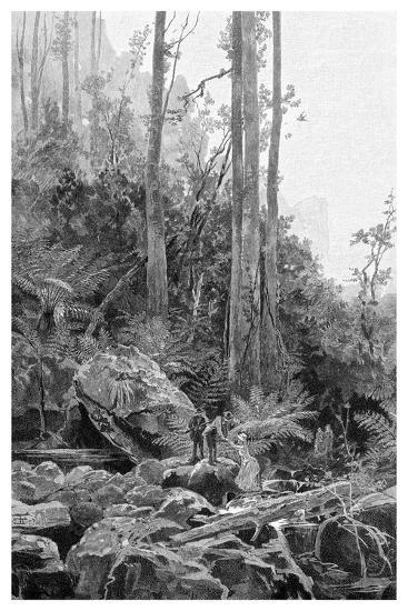 A Gully in the Blue Mountains, Australia, 1886-Frederic B Schell-Giclee Print