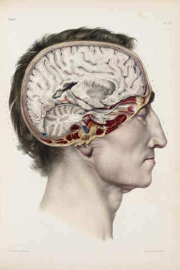 A Hand Coloured Lithograph of a Dissected Head in Profile Showing the Brain-Nicolas Henri Jacob-Giclee Print