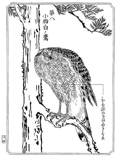 A Hawk, 1898-Kawanabe Kyosai-Giclee Print