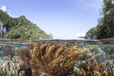 A Healthy and Diverse Coral Reef Grows in Raja Ampat, Indonesia-Stocktrek Images-Photographic Print