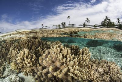 A Healthy Coral Reef Grows in the Solomon Islands-Stocktrek Images-Photographic Print