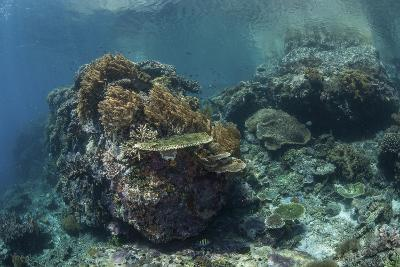 A Healthy Coral Reef Thrives in Komodo National Park, Indonesia-Stocktrek Images-Photographic Print