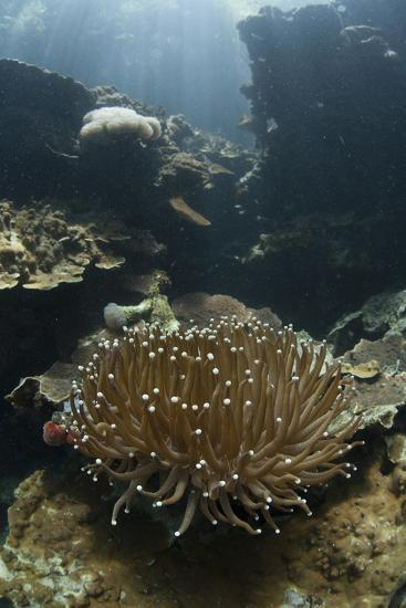 A Heliofungia Coral Colony Grows on a Reef Inside Palau's Lagoon-Stocktrek Images-Photographic Print