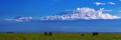 A Herd of African Elephants in a Grassland Landscape with Mount Kilimanjaro in the Distance-Babak Tafreshi-Photographic Print