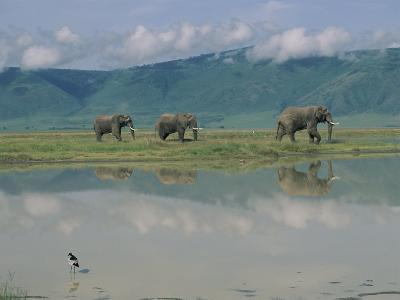 A Herd of African Elephants Traveling Along a River in Chobe National Park-Beverly Joubert-Photographic Print