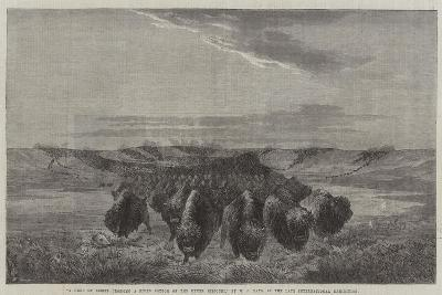 A Herd of Bisons Crossing a River Bottom on the Upper Missouri-William Jacob Hays-Giclee Print