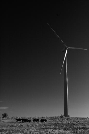 A Herd of Cattle Walk in a Pasture Below a Modern Wind Turbine-Michael Forsberg-Photographic Print