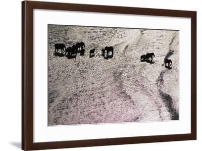 A Herd of Elephants in Tsavo National Park-Michael Nichols-Framed Photographic Print