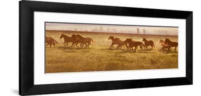 A Herd of Horses at Sunrise.-Tanya Yurkovska-Framed Photographic Print