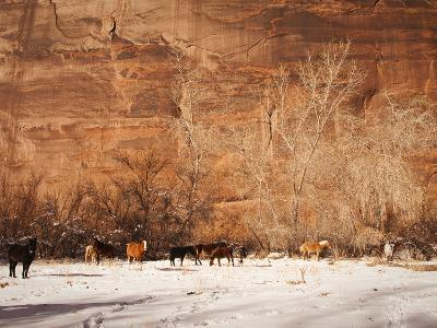 A Herd of Horses in a Snowy Landscape at the Bottom of a Cliff-James Forte-Photographic Print