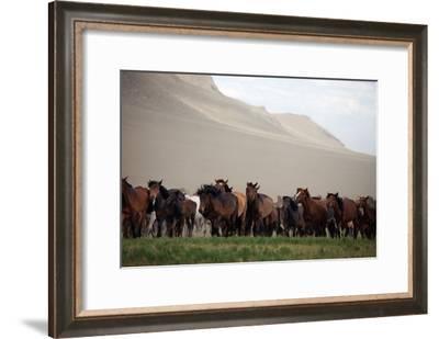 A Herd of Horses on the Mongolian Steppe-Ben Horton-Framed Photographic Print