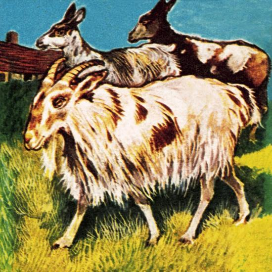 A Herd or Tribe of Goats-English School-Giclee Print