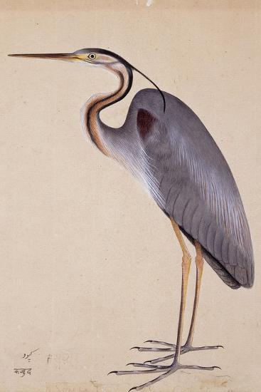A Heron, C. 1820--Giclee Print