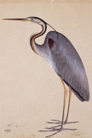A Heron, C. 1820