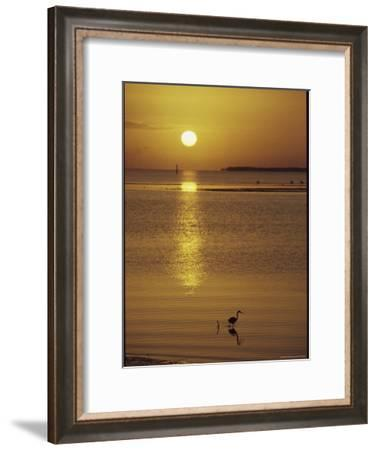 A Heron Wades in the Shallow Water of the Gulf of Mexico at Sunset-Medford Taylor-Framed Photographic Print