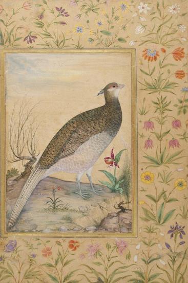 A Himalayan Cheer Pheasant, C.1620, Border C.1635--Giclee Print