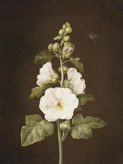 A Hollyhock-Barbara Regina Dietzsch-Giclee Print