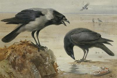 A Hooded Crow and a Carrion Crow, 1924-Archibald Thorburn-Giclee Print