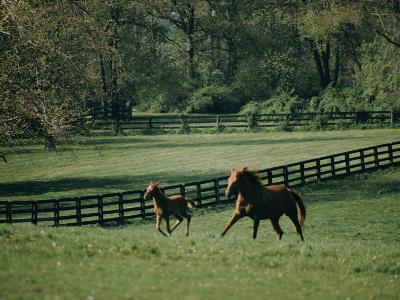 A Horse and its Colt Run Through a Field-Dick Durrance-Photographic Print