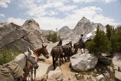 A Horse and Rider Lead a String of Pack Animals in King's Canyon National Park, California, USA-Joel Sartore-Photographic Print