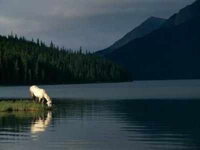 A Horse Drinks from a Lake-Raymond Gehman-Photographic Print