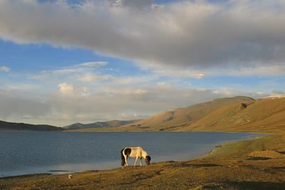 https://imgc.artprintimages.com/img/print/a-horse-grazes-by-a-lake-in-western-mongolia_u-l-polepf0.jpg?p=0