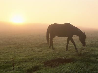 A Horse Grazes in a Field in Umbria-Tino Soriano-Photographic Print