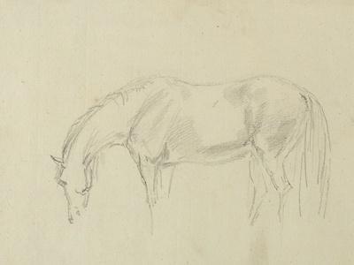 https://imgc.artprintimages.com/img/print/a-horse-grazing_u-l-pliui40.jpg?p=0