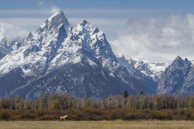 A Horse in Front of the Grand Teton-Galloimages Online-Photographic Print