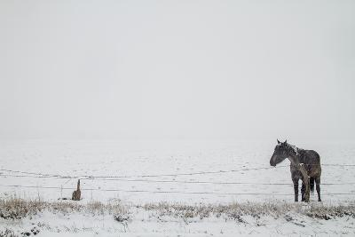 A Horse on a Ranch in Montana-Cory Richards-Photographic Print