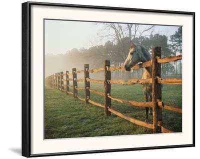 A Horse Watches the Mist Roll in over the Fields-Richard Nowitz-Framed Photographic Print