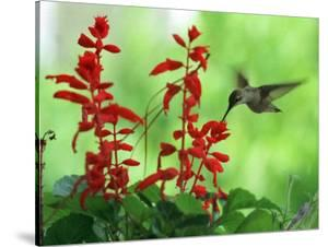 A Hummingbird Seeks Nectar from a Flower Box Outside a Home