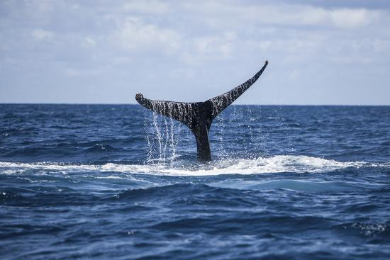 A Humpback Whale Raises its Tail as it Dives into the Atlantic Ocean-Stocktrek Images-Photographic Print