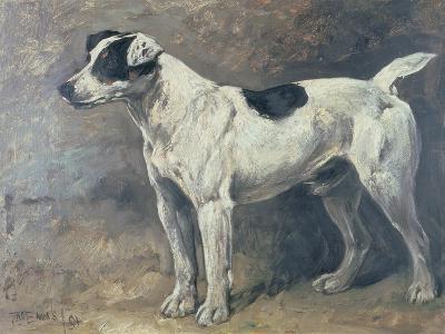 A Jack Russell, 1891-John Emms-Giclee Print
