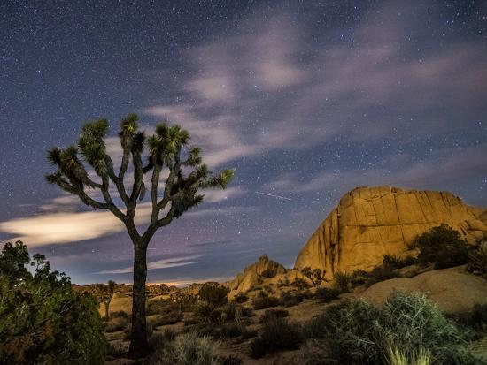 A Joshua Tree Night Sky Is Hard To Beat Photographic Print By Daniel Kuras Art Com