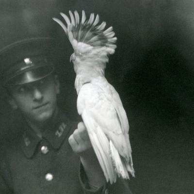 A Keeper Holds a Young Cockatoo at London Zoo, September 1921-Frederick William Bond-Photographic Print