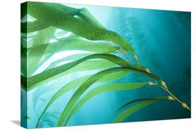 A Kelp Forest-Cesare Naldi-Stretched Canvas Print