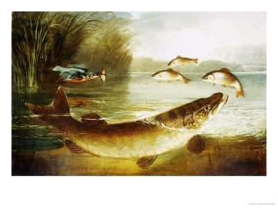 A Kingfisher and a Pike Capturing Perch-Henry Leonides Rolfe-Giclee Print