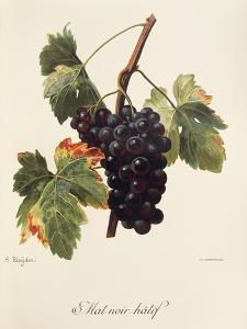 Mat Noir Hatif Grape by A. Kreyder