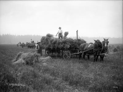 A.L. Brown Farm, Sherlock, Washington (ca. 1909)-Ashael Curtis-Giclee Print