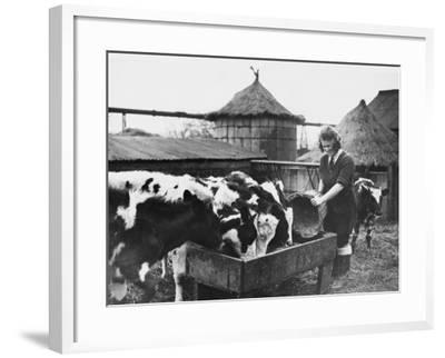 A Land Girl Working Feeding Cattle on a Farm During World War Ii-Robert Hunt-Framed Photographic Print