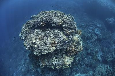 A Large Coral Bommie Grows on a Reef in the Solomon Islands-Stocktrek Images-Photographic Print