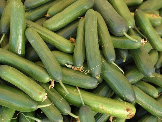 A Large Pile of Freshly Harvested Green Cucumbers--Photographic Print
