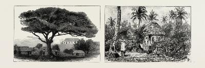 A Large Tree at Nukualofa, Tonga Islands (Left); a Tongan Village, Vavau, Tonga Islands (Right)--Giclee Print