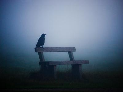 A Large Western Jackdaw Sits on a Bench in Dense Fog-Alex Saberi-Photographic Print
