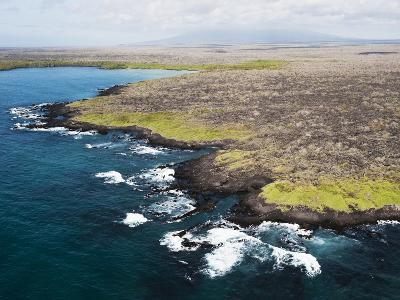 A Lava Coastline with New Green Growth with the Sierra Negra Volcano-Mauricio Handler-Photographic Print